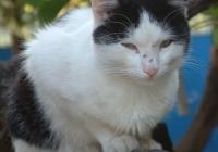 Free Cat Photo