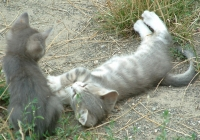 Free Kitten Photo