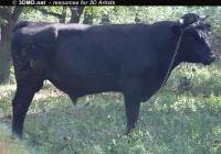 Free Bull Photo Side View