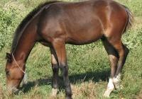 brown foal photo 12