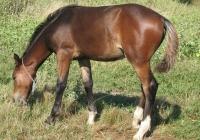 brown foal photo 14