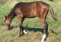 brown foal photo 16