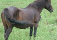 brown horse photo 02