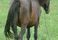brown horse photo 07