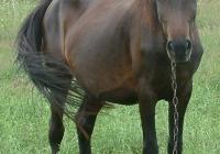 brown horse photo 13