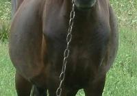 brown horse photo 15