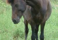 brown horse photo 16