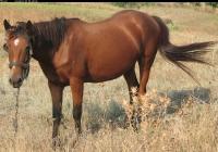 red stallion photo 07