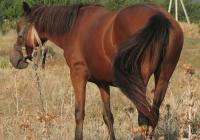 red stallion photo 08