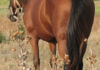red stallion photo 10