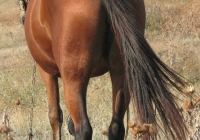 red stallion photo 14