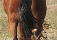 red stallion photo 15