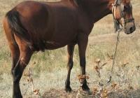 red stallion photo 16