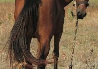 red stallion photo 17