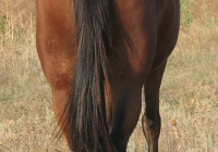red stallion photo 18