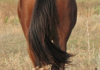 red stallion photo back