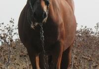 red stallion photo front