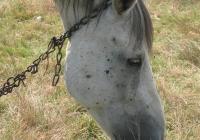 white horse photo 04