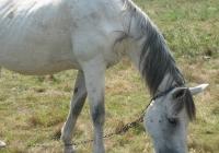 white horse photo 05