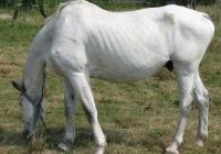 white horse photo 08