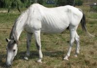 white horse photo 11