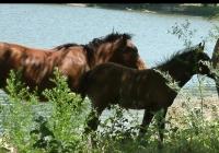 horses 08