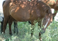 horses 14