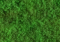 Seamless Green Turksih Towel Texture