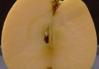 Free Apple Slice Texture