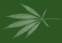 Free Hemp Leaf Texture
