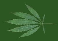 Free Marijuana Leaf Texture