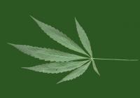 Free Cannabis Leaf Texture
