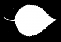Birch Tree Leaf Texture Mask
