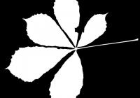 Free Chestnut Tree Leaf Texture Mask 03