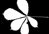 Free Chestnut Tree Leaf Texture Mask 04