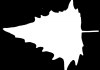 Free Goosfoot Leaf Texture Mask 08