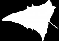 Free Goosfoot Leaf Texture Mask 13