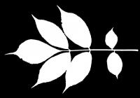 leaf_mask_00288