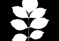 leaf_mask_00385