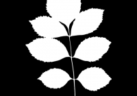 leaf_mask_00386