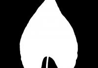 leaf_mask_00224