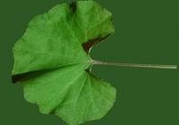 leaf_00238