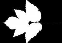 Box Elder Tree Leaf Texture Mask 02