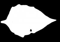 Free Jerusalem Artichoke Leaf Texture Mask 01