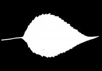 Free Jerusalem Artichoke Leaf Texture Mask 04