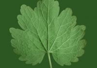 Leaves8