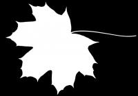 Free Maple Tree Leaf Texture Mask