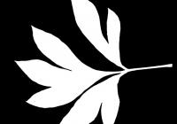 Pion Leaf Opacity Mask Texture 01