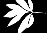 Pion Leaf Opacity Mask Texture 02