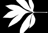 Pion Leaf Opacity Mask Texture 03